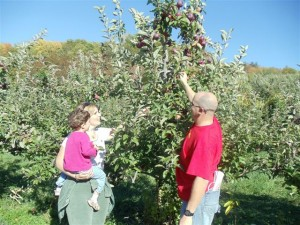 Apple harvest a mixed bag
