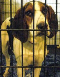 Found hound in the pound.