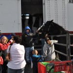 FFA john shaws ponies draw a crowd web