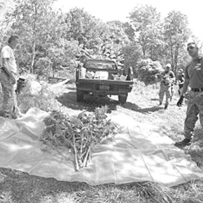 Marijuana-Eradication-2013-1-300x239