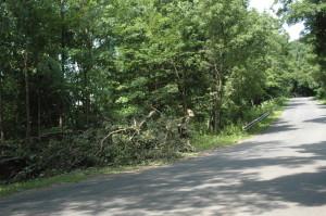 Storm Damage (2)