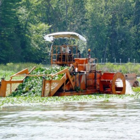 Water chestnut harvester redit VT DEC
