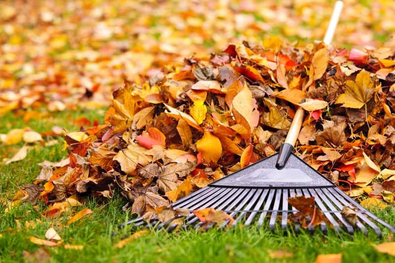 Village sets leaf, brush pick-up dates