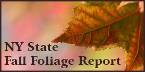 NY State Fall Foliage Report